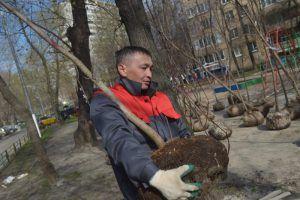 Работы по озеленению выполнят на территории района. Фото: Александр Казаков, «Вечерняя Москва»
