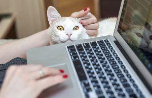 Вебинар о человеческих эмоциях проведут спикеры Центра «Моя карьера». Фото: сайт мэра Москвы