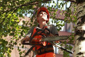Санитарную обрезку деревьев провели в районе. Фото: Наталия Нечаева, «Вечерняя Москва»