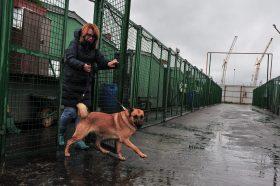Около 17 тысяч кошек и собак ждут своих хозяев в приютах столицы. Фото: Фото: Пелагия Замятина, «Вечерняя Москва»